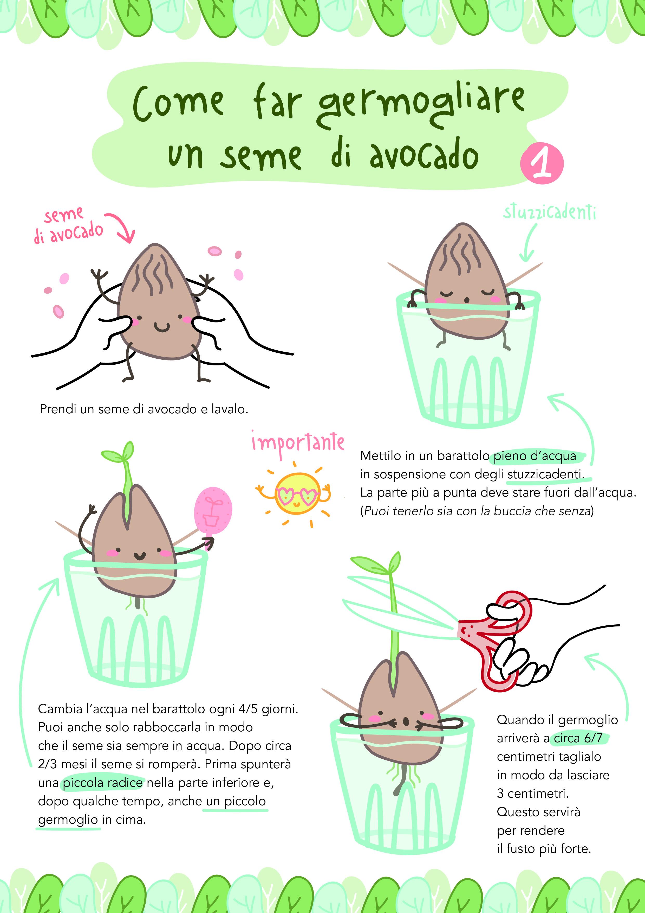 Nocciolo Di Avocado In Acqua labandadelsemino – parte prima – clara battello